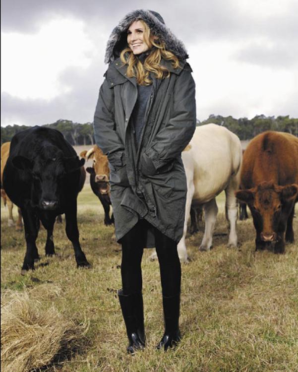 GC_cows